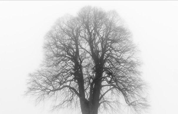 Lindenbaum im Schnee, Winter. Photographie