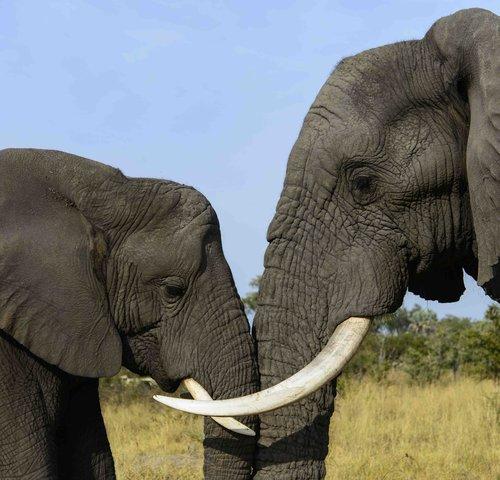 Multivisionsvortrag »Namibia & Botswana«