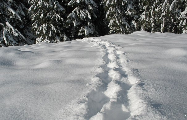 Fußspuren in Schneelandschaft vor Wald